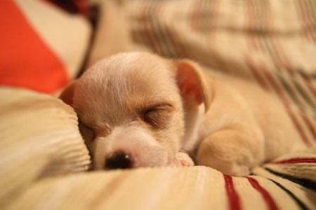 すやすや眠る子犬