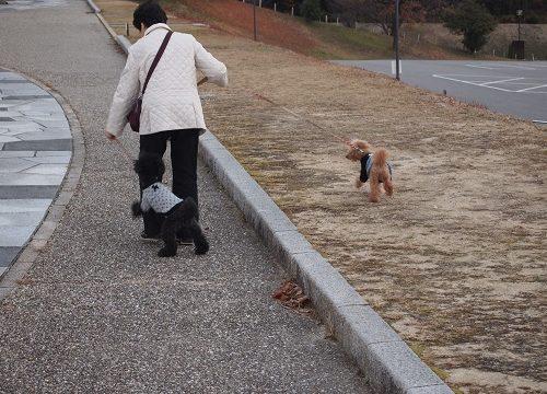 おばあちゃんと散歩する犬