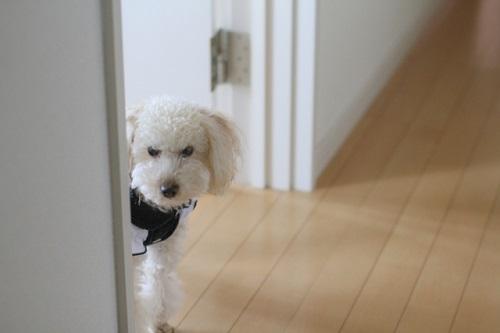叱られて機嫌が悪い犬