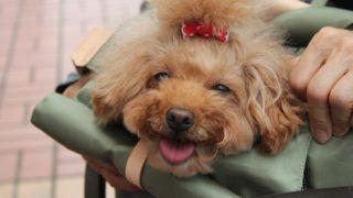 キャリーバッグで笑う犬