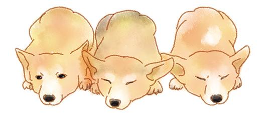 仲良しの犬達