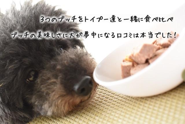 ブッチドッグフードの良い口コミ・悪い口コミを食べてみて検証